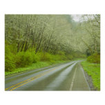 Remote highway through forest poster