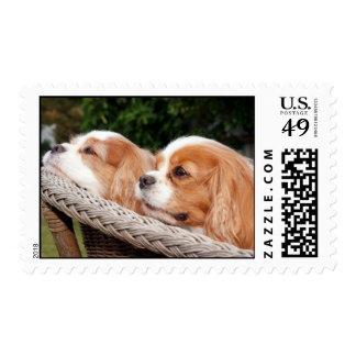 Renae and Joey Cavalier Spaniels Postage Stamp