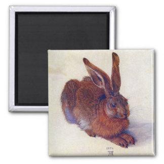 Renaissance Art, Young Hare by Albrecht Durer Magnet