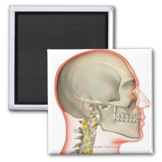 Rendering of the nerves of the neck 2 inch square magnet