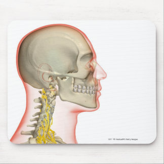 Rendering of the nerves of the neck mouse pad