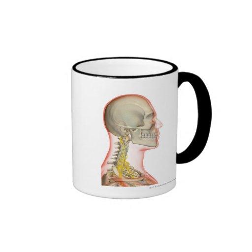 Rendering of the nerves of the neck ringer mug