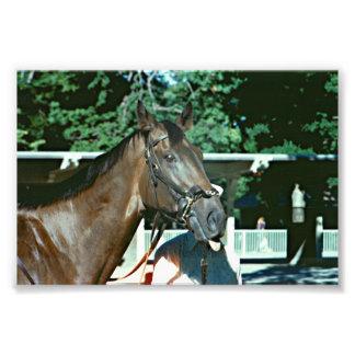 Renuncie el caballo de carreras 1977 cojinete