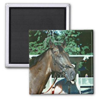 Renuncie el caballo de carreras 1977 imán cuadrado