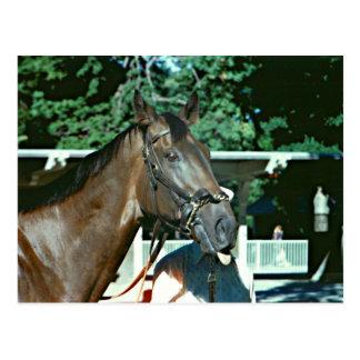 Renuncie el caballo de carreras 1977 postal