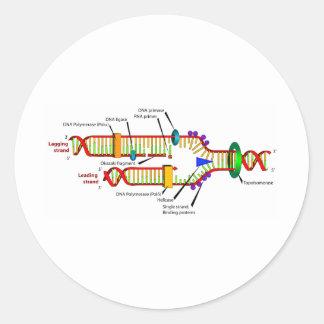 Réplica de la DNA Etiqueta