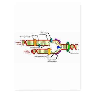 Réplica de la DNA Tarjeta Postal