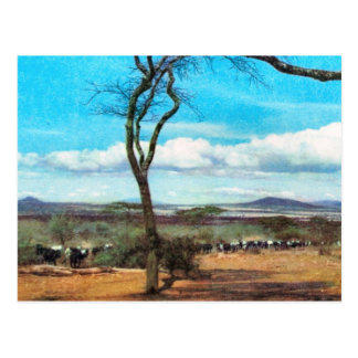 Replica  Vintage Tanganyika, Masai, herd of cattle Postcard
