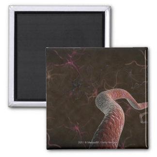 Representación de Digitaces de neuronas Imán Cuadrado