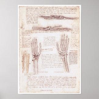 Representación de la mano, Leonardo da Vinci Póster