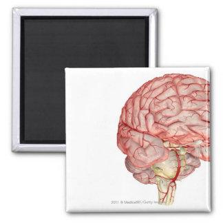 Representación de Realitic del cerebro humano Imán Cuadrado