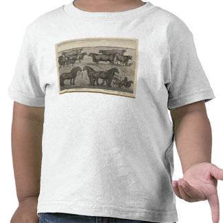 Representantes de Kansas Camisetas
