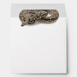 Reptil de la serpiente del pitón