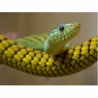 Reptil de la serpiente fotoescultura vertical