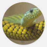 Reptil de la serpiente etiqueta