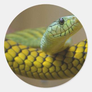 Reptil de la serpiente pegatina redonda
