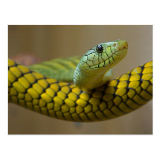 Reptil de la serpiente tarjetas postales