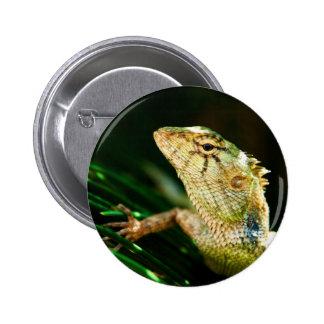 Reptil del lagarto pin redondo de 2 pulgadas