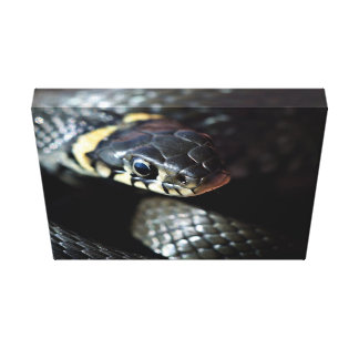 Reptil temático impresión en lienzo