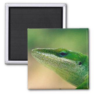 Reptil verde gruñón imán cuadrado