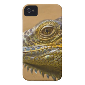 Reptile iPhone 4 Cover