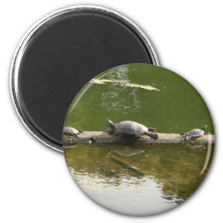 reptile merchandise 2 inch round magnet