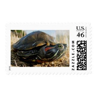 reptile merchandise postage