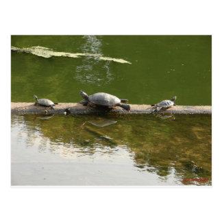 reptile merchandise postcard