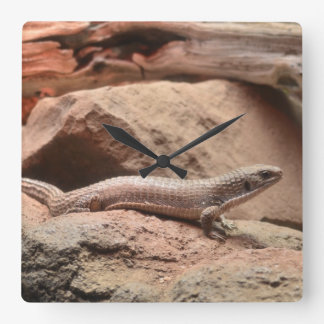 Reptile Northern blue-tongued skink Lizard Square Wall Clock