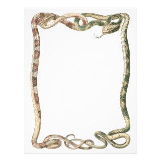 """Reptiles del vintage, serpientes o frontera folleto 8.5"""" x 11"""""""