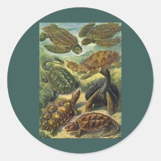 Reptiles marinos del vintage, tortuga de la tierra etiqueta redonda