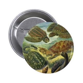 Reptiles marinos del vintage, tortuga de la tierra pin redondo 5 cm