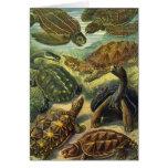 Reptiles marinos del vintage, tortuga de la tierra tarjeta de felicitación