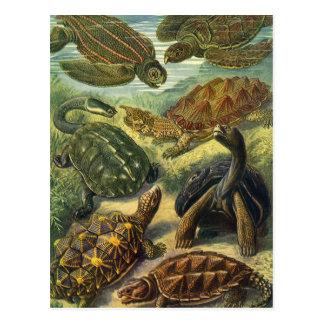 Reptiles marinos del vintage, tortuga de la tierra tarjetas postales