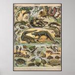 Reptiles Print