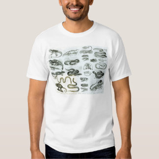 Reptiles, Serpents and Lizards Tshirt
