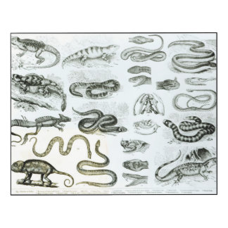 Reptiles, Serpents and Lizards Wood Wall Art