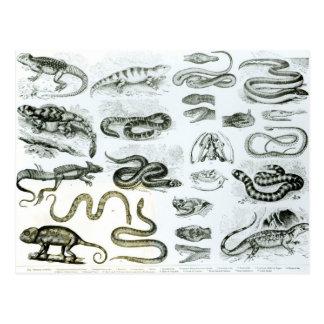 Reptiles serpientes y lagartos tarjeta postal