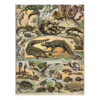 Reptiles Tarjeta Postal