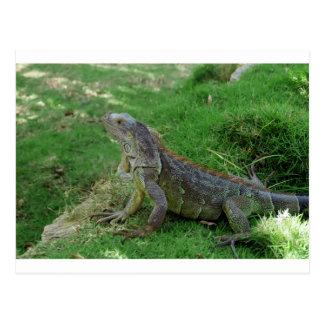 Reptilian Look.JPG Postal