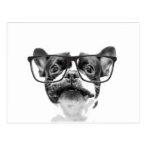 Reputable French Bulldog with Glasses Postcard