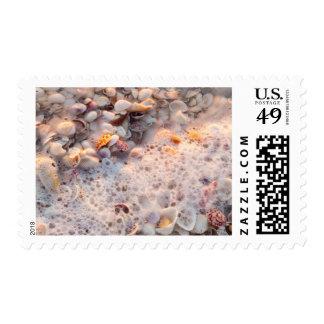 Resaca y Seashells entrantes en la isla de Sanibel Sellos Postales