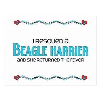 Rescaté a un corredor de cross del beagle (el postales