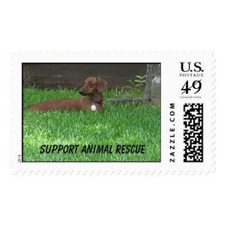 Rescate animal de la ayuda timbre postal