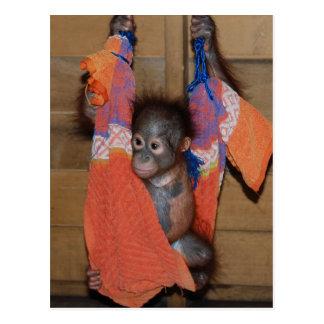 Rescate dulce del orangután del bebé tarjetas postales