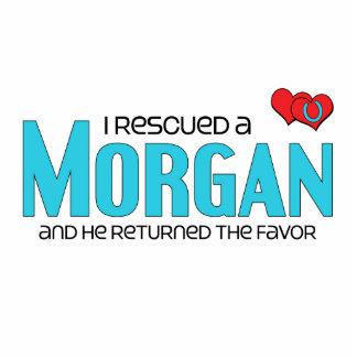 Rescaté Morgan el caballo masculino Escultura Fotográfica
