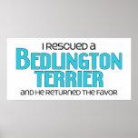 Rescaté un Bedlington Terrier (el perro masculino) Posters