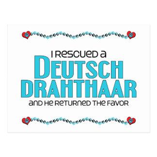 Rescaté un Deutsch Drahthaar (el perro masculino) Postal