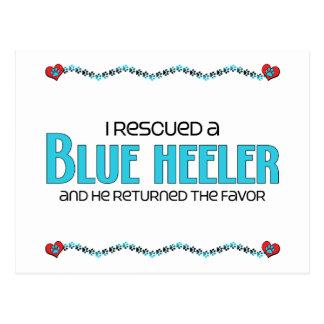 Rescaté un Heeler azul (el perro masculino) Postal