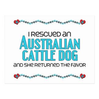 Rescaté un perro australiano del ganado (el perro postal